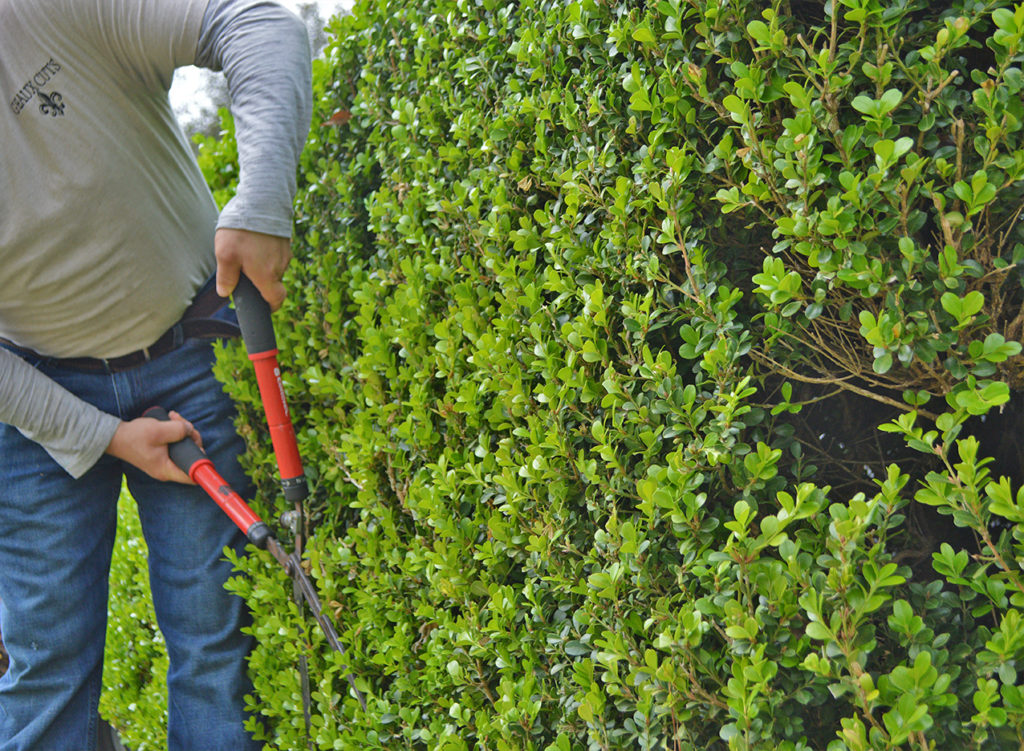 shrub trimming