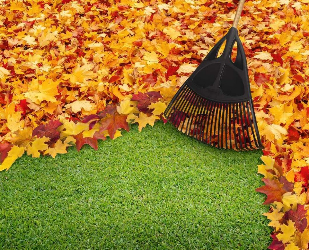 leaf cleanups